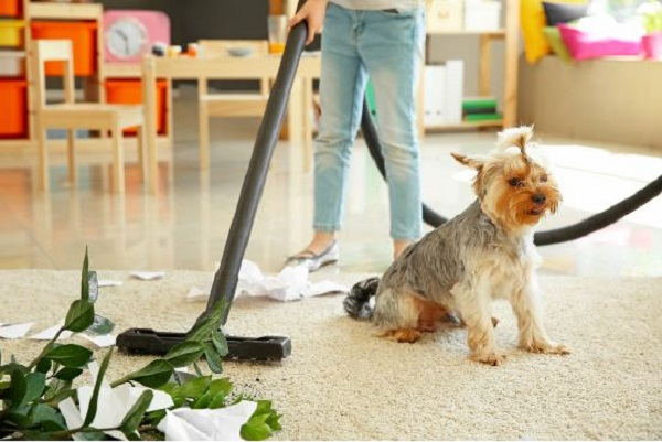 Best Vacuum Cleaners for Pet Stains