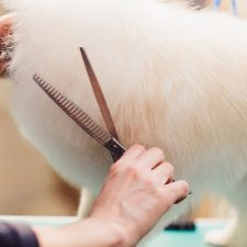 How do you cut a dog's hair with thinning shears